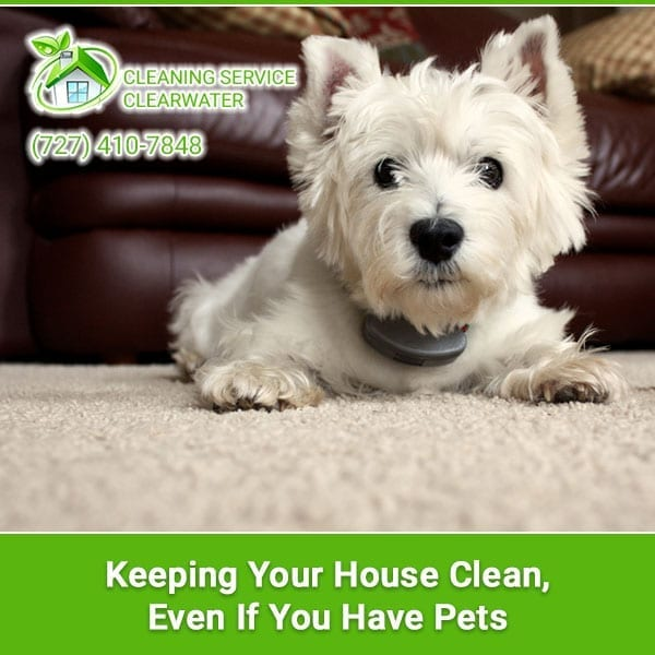 Keeping Your House Clean, Even If You Have Pets