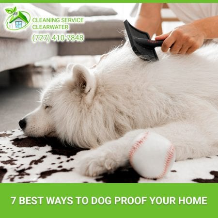 7 Best Ways To Dog Proof Your Home